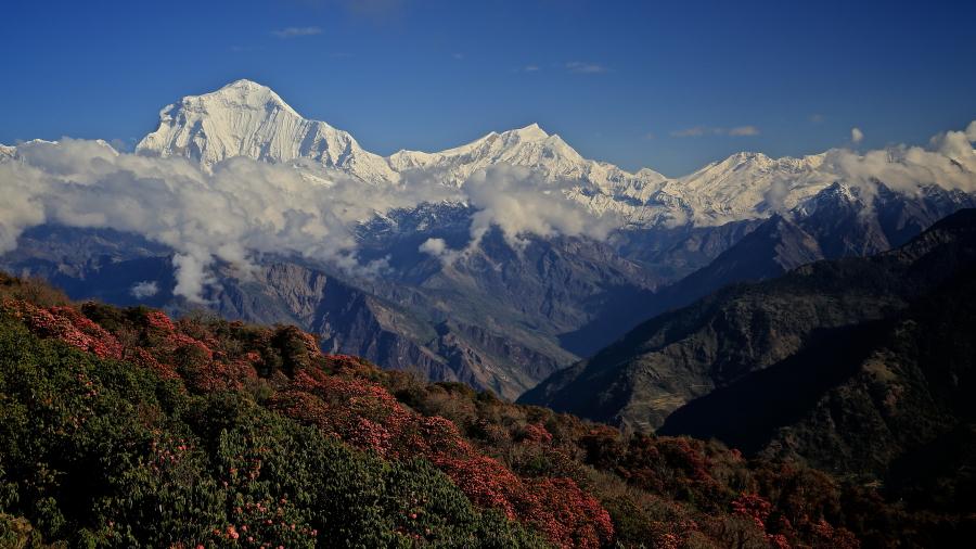 Ghorepani- Ghandruk trek