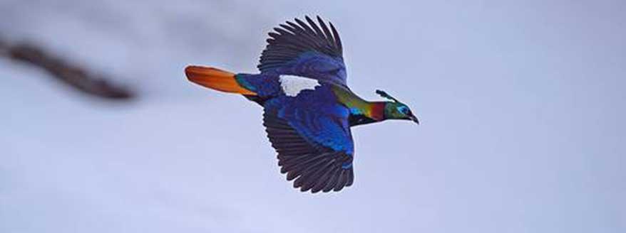 Bhutan Bird Watching Tour